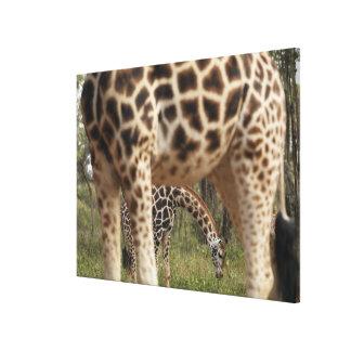 Giraffes 4 canvas print