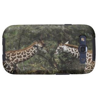 Giraffes Feeding On Acacia Branch, Africa Samsung Galaxy S3 Cover