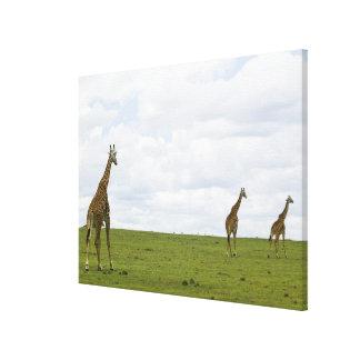 Giraffes in Kenya, Africa 2 Canvas Print