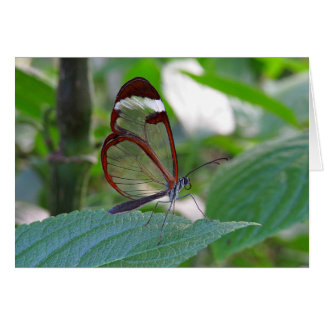 Glass Wing Butterfly Note Card
