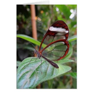 Glasswing Butterfly Notecard Note Card