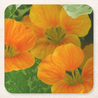 Glowing Orange Nasturtium Party Coaster