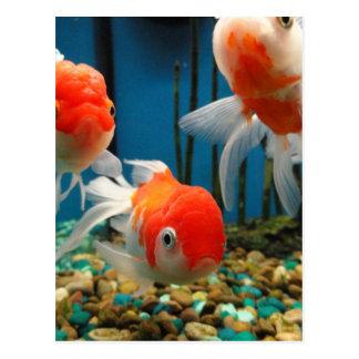 Go Fish Postcard