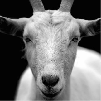 goat photo sculpture decoration