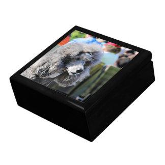 Goldberg - Chanel - Standard Poodle Gift Box