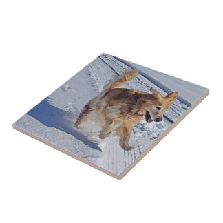 Golden At Play Tile