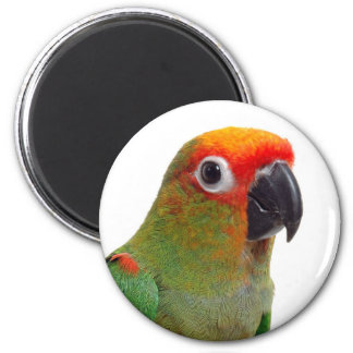 Golden-capped conure 6 cm round magnet