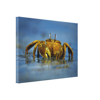 Golden Crab by the Sea Canvas Print Canvas Print