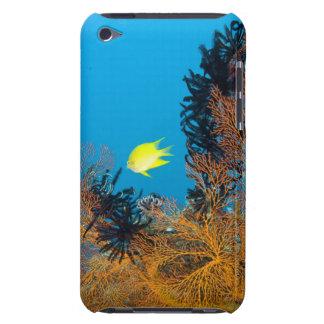 Golden Damselfish (Amblyglyphidodon aureus) iPod Touch Covers