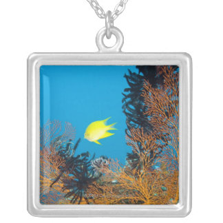 Golden Damselfish (Amblyglyphidodon aureus) Silver Plated Necklace