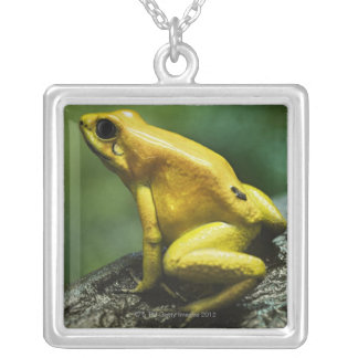 Golden Dart Frog Silver Plated Necklace