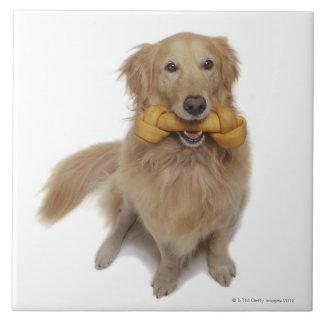 Golden Retriever Dog holding bone in mouth Tile