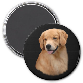 Golden Retriever Frisco Magnet