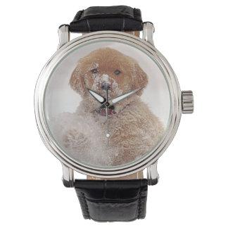 Golden Retriever Pup in Snow Watch