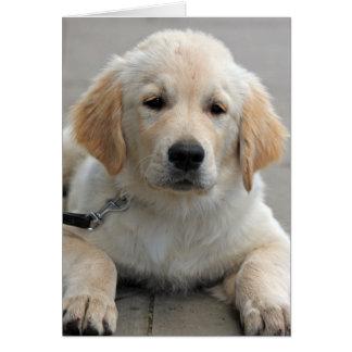 Golden Retriever puppy dog cute photo note card
