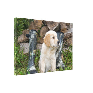 golden retriever puppy with boots canvas print