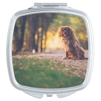 Golden Spaniel dog panting in the sun on path Vanity Mirror