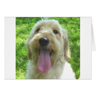 Goldendoodle Products Card