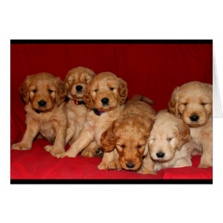 Goldendoodle Puppies Thinking Of You Card