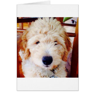 Goldendoodle Puppy Card