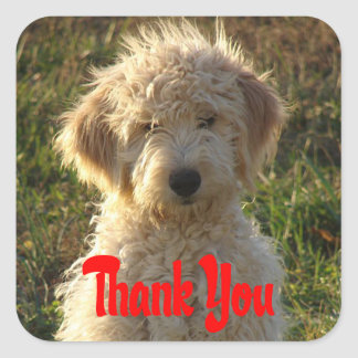 Goldendoodle Puppy Dog Thank You Sticker / Label