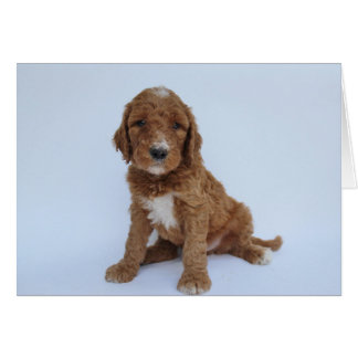 Goldendoodle Puppy Greeting Card