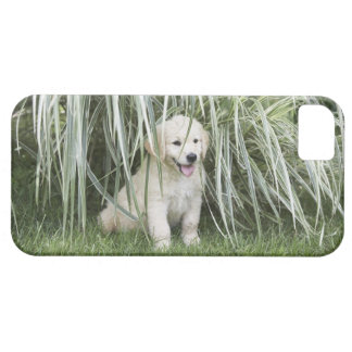 Goldendoodle puppy sitting under tall grasses iPhone 5 cover