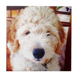 Goldendoodle Puppy Small Square Tile