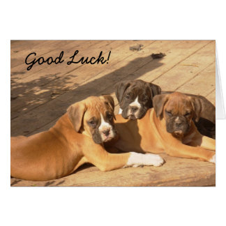 Good Luck Boxer puppies greeting card