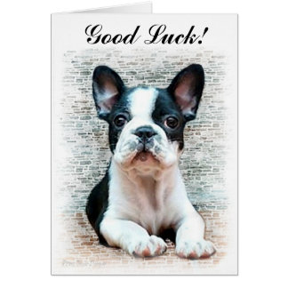 Good Luck French Bulldog puppy card