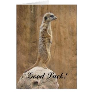 Good Luck Meerkat greeting card