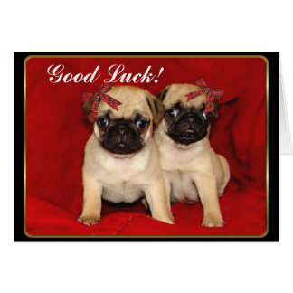 Good Luck puppies greeting card