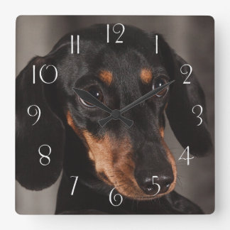 Gorgeous dachshund portrait square wall clock