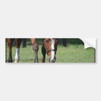Gorgeous Quarter Horse Bumper Sticker