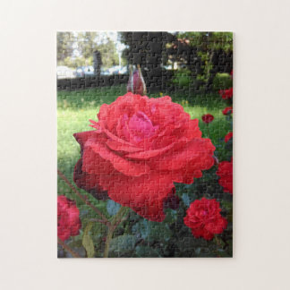 Gorgeous Red Roses Jigsaw Puzzle