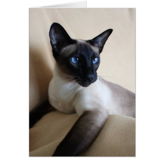 Gorgeous Siamese Cat Face Card