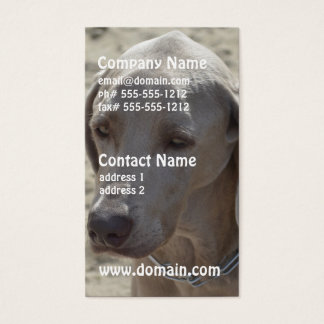 Gorgeous Weimaraner Business Card