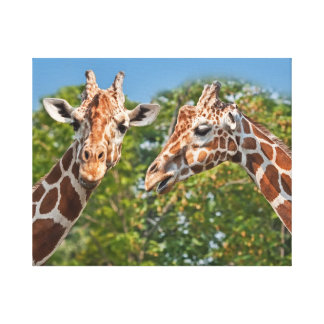 Gossiping Giraffes Canvas Print