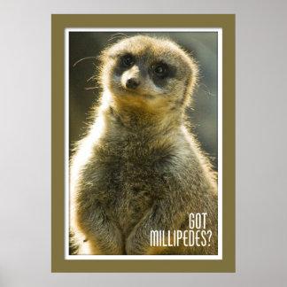 Got Millipedes? Posters