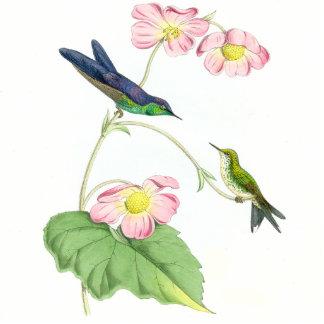 Goulds' Hummingbird Ornament Photo Cut Out