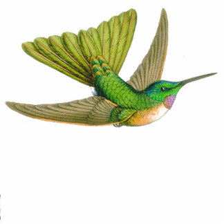 Goulds Hummingbirds Ornament Photo Cutouts