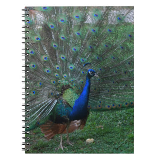 Graceful indian peacock peafowl paon bird notebooks