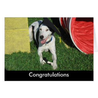 Graduation dog card