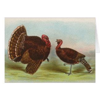 Graham - Bronze Turkeys Card