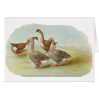 Graham - Toulouse and Brown China Geese Card