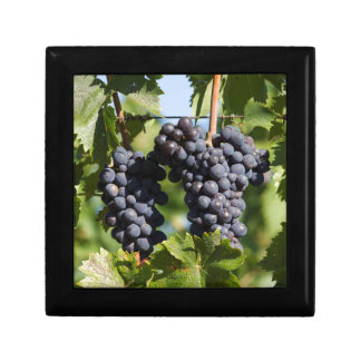 grape and vineyard gift box