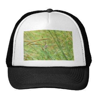 GRASS BIRD RURAL QUEENSLAND AUSTRALIA CAP