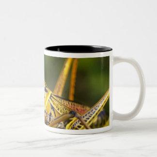 Grasshopper, Everglades National Park, Florida, Two-Tone Coffee Mug