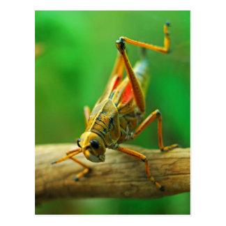 Grasshopper Postcard