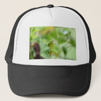 GRASSHOPPER RURAL QUEENSLAND AUSTRALIA TRUCKER HAT